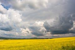 Nuvens sobre o campo das sementes oleaginosas Imagens de Stock Royalty Free