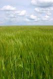 Nuvens sobre o campo verde imagens de stock