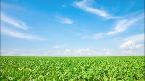 Nuvens sobre o campo verde Timelapse video estoque