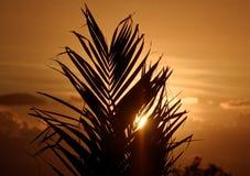 Nuvola di île de la réunion del sole della palma fotografia stock libera da diritti