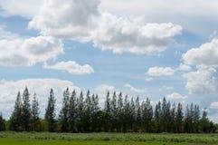 Nuvola e pino Fotografie Stock