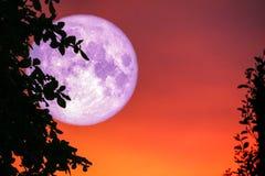 nuvola posteriore dell'albero della siluetta della luna di rosa sul cielo di tramonto fotografie stock
