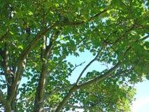 Nuvola scura e foschia blu Fotografia Stock Libera da Diritti