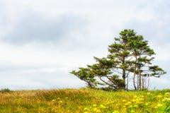 Nuvole, alberi, erbe alte e senape selvaggia Fotografie Stock Libere da Diritti
