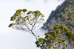 Nuvole all'allerta di Kalalau, Kauai Immagini Stock Libere da Diritti