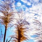 Nuvole alte costiere dell'erba del cielo blu Fotografie Stock Libere da Diritti