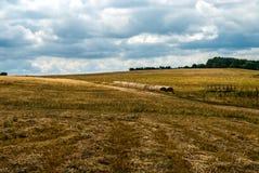 Nuvole asciutte mobili di estate del cielo di giallo del raccolto del fieno del campo Immagini Stock