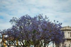 Nuvole bianche del cielo porpora dell'albero blu fotografia stock libera da diritti