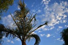 Nuvole che si formano dietro la palma Immagine Stock Libera da Diritti