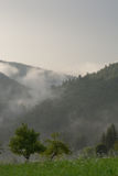 Nuvole che si rivoltano la foresta Fotografie Stock Libere da Diritti