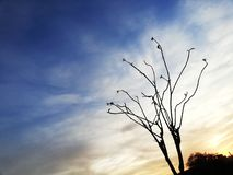 Nuvole, cielo blu ed albero di rilassamento fotografia stock libera da diritti