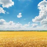 Nuvole in cielo blu sopra il campo dorato Fotografia Stock