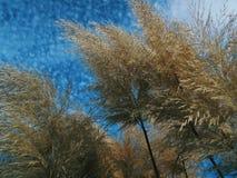 Nuvole, cielo, natura, rilassantesi Immagine Stock