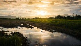Nuvole del giacimento e dell'oro del riso con il sole di riflessione su acqua Fotografia Stock