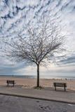 Nuvole della palla di cotone dietro un albero nudo immagini stock libere da diritti