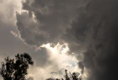 Nuvole dense sopra gli alberi di eucalyptus fotografia stock libera da diritti