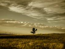 Nuvole di seppia dell'albero del pioppo nel cielo Fotografia Stock Libera da Diritti