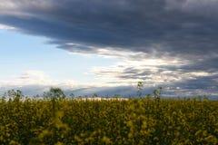 Nuvole di tempesta e giacimento del Canola fotografia stock libera da diritti