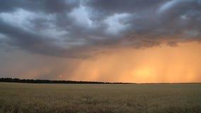 Nuvole e fulmine di tempesta nel cielo di tramonto sopra un campo di grano Paesaggio di sera video d archivio
