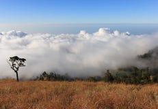 Nuvole ed albero sopra la montagna alta Immagine Stock
