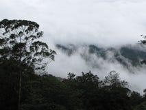 Nuvole, foresta Fotografia Stock