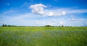 Nuvole lanuginose della campagna rurale di orizzonte di primavera dei Wildflowers Fotografia Stock