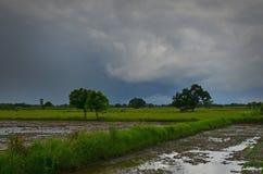 Nuvole nere e pioggia sopra il campo nell'agricoltura della stagione Immagini Stock