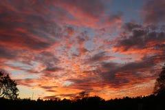 Nuvole russe di tramonto di sera della foresta Fotografia Stock
