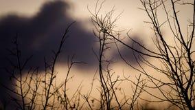 Nuvole scure con il cielo dell'arancia degli alberi Immagini Stock Libere da Diritti