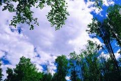 Nuvole su un cielo, incorniciato dalle corone dell'albero Immagine Stock