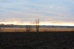 Nuvole sull'orizzonte negli ultimi raggi del tramonto sopra le canne asciutte, gli alberi senza foglie ed il campo arato fotografia stock
