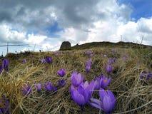 Nuvole tempestose sopra i fiori della montagna Fotografia Stock