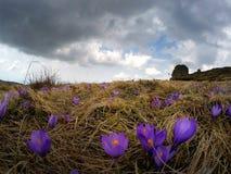 Nuvole tempestose sopra i fiori della montagna Immagine Stock