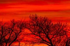 Nuvole variopinte ed alberi Immagini Stock