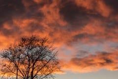 Nuvole variopinte ed albero Fotografie Stock
