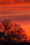 Nuvole variopinte ed albero Fotografie Stock Libere da Diritti