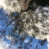 Nuvole verdi di bianco dell'albero del cielo blu Immagine Stock