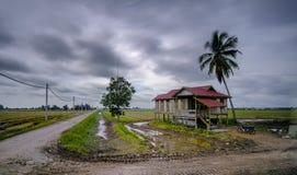 Nuvoloso a Paddy Field Fotografia Stock