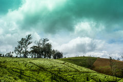 Nuwara Eliya Σρι Λάνκα στοκ φωτογραφία με δικαίωμα ελεύθερης χρήσης