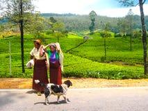 Nuwara Eliya, Шри-Ланка - 3-ье мая 2009: Плантации чая на острове Стоковое фото RF