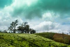 Nuwara Eliya Шри-Ланка стоковая фотография rf