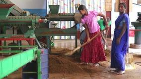 NUWARA ELIYA, SRI LANKA - MÄRZ 2014: Ansicht von den Frauen eines drei Einheimischen, die an einer Maschine in der Teefabrik in N stock footage
