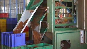 NUWARA ELIYA, SRI LANKA - MÄRZ 2014: Die Ansicht einer Maschine, die Tee in einer Teefabrik in Nuwara Eliya bearbeitet und produz stock footage