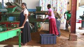 NUWARA ELIYA, SRI LANKA - MÄRZ 2014: Die Ansicht von den Frauen eines drei Einheimischen, die an einer Maschine in der Teefabrik  stock footage
