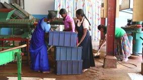 NUWARA ELIYA, SRI LANKA - MÄRZ 2014: Die Ansicht von den Frauen eines vier Einheimischen, die an einer Maschine in der Teefabrik  stock footage