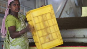 NUWARA ELIYA, SRI LANKA - MARCH 2014: Local woman working on a machine in the tea factory in Nuwara Eliya. Sri Lanka is the world' stock footage