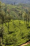 Nuwara Eliya in Sri Lanka Stock Photography