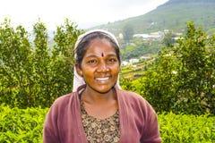 Trabajador de sexo femenino en la cosecha Imagenes de archivo