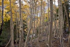 NV-Great Basin National Park-Wheeler Peak Stock Image