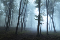 Névoa e luz na floresta Foto de Stock